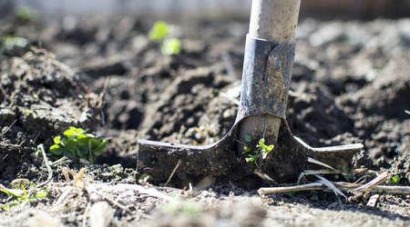 Waterschap geeft subsidie voor vergroenen tuin